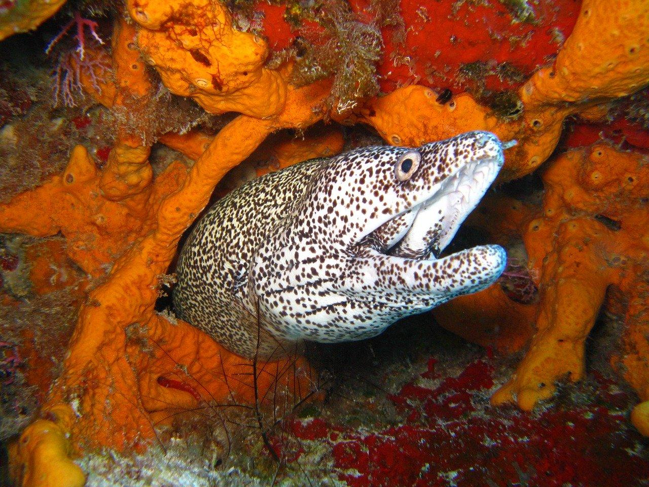 diving, ocean, coral