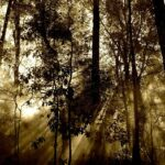 forest, rays, fog